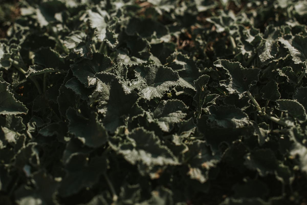 932-Petersone-Liene-photoshoot-blog